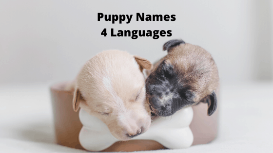 Puppy Names in Four Languages