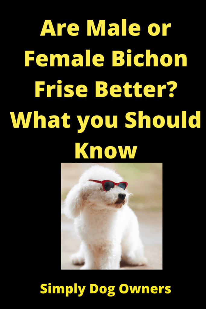 Choosing Male or Female Bichon? Weighing Your Options 3