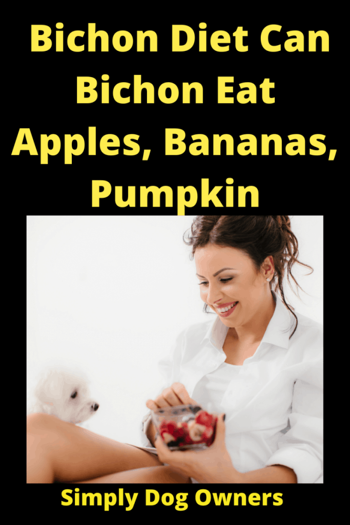 Bichon Diet Can Bichon Eat Apples, Bananas, Pumpkin 1