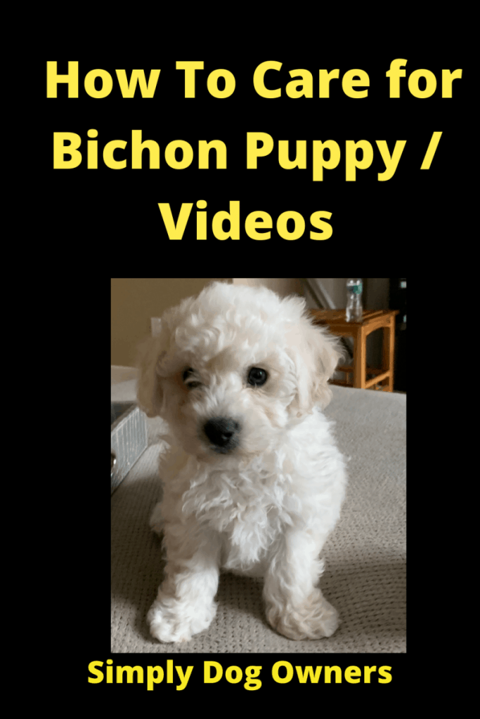 How To Care for Bichon Puppy / Videos 2