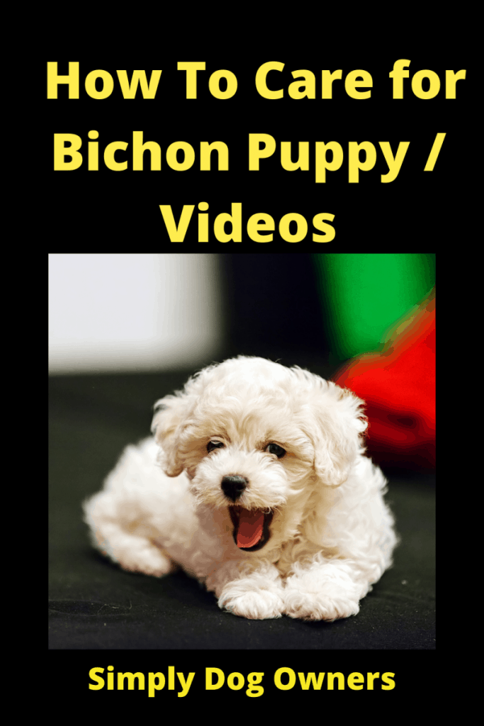 How To Care for Bichon Puppy / Videos 1