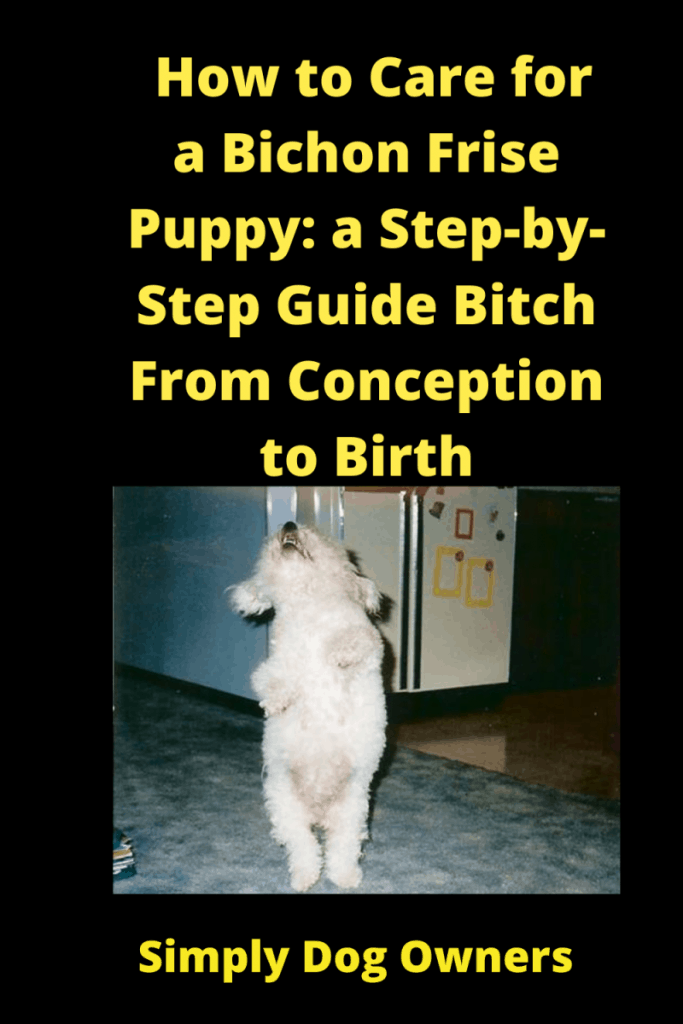 How to Care for a Pregnant Bichon Frise: Step-by-Step 1