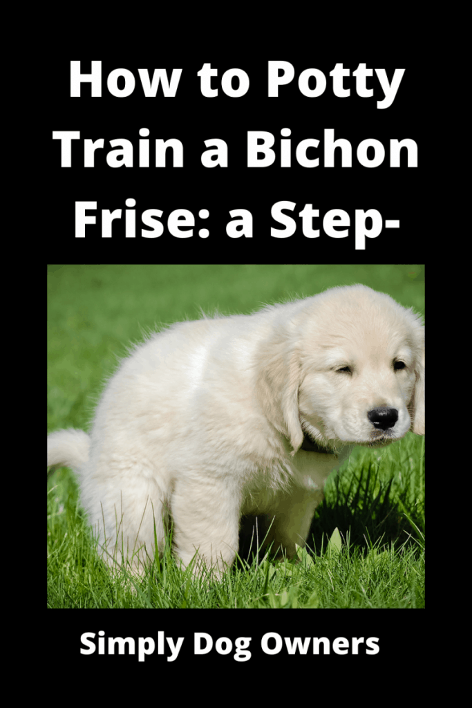 How to Potty Train a Bichon Frise: a Step-by-Step Guide 1