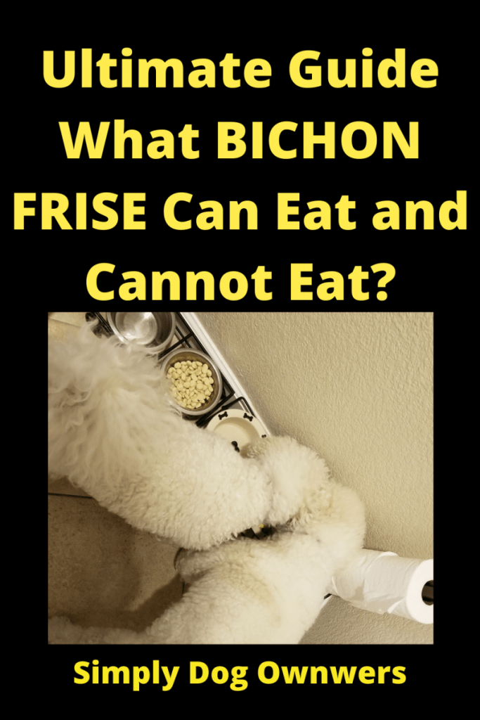 Ultimate Guide / What Bichon Frise Can Eat and Cannot Eat. 1