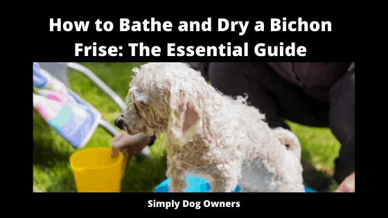 https://animals.mom.com/how-to-shave-a-bichon-12460092.html