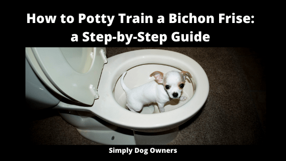 How to Potty Train a Bichon Frise_ a Step-by-Step Guide