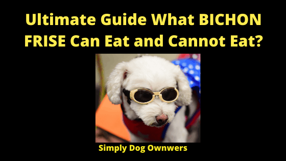 Ultimate Guide What BICHON FRISE Can Eat and Cannot Eat