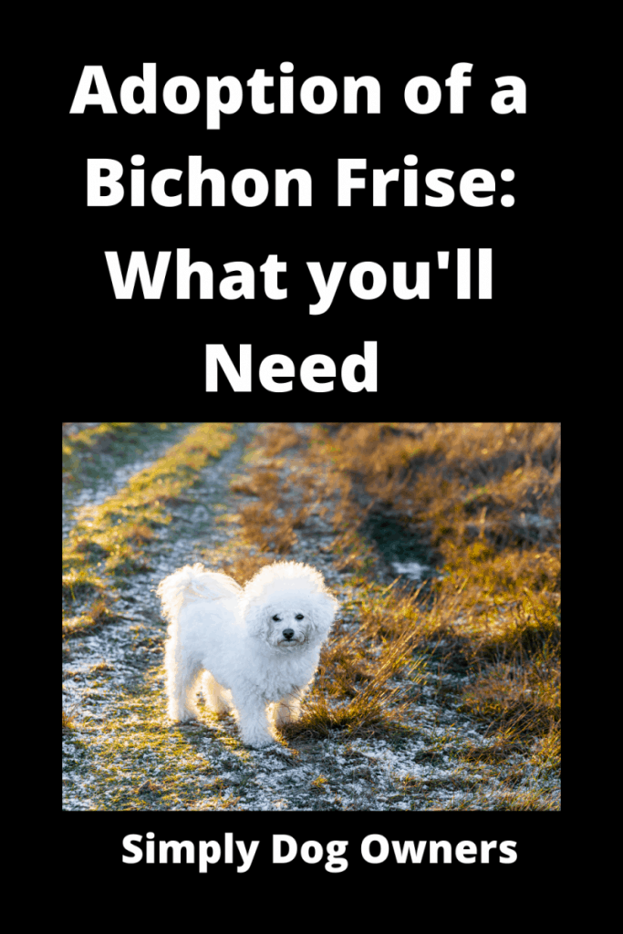 Adoption of a Bichon Frise: What you'll need and what to do 1