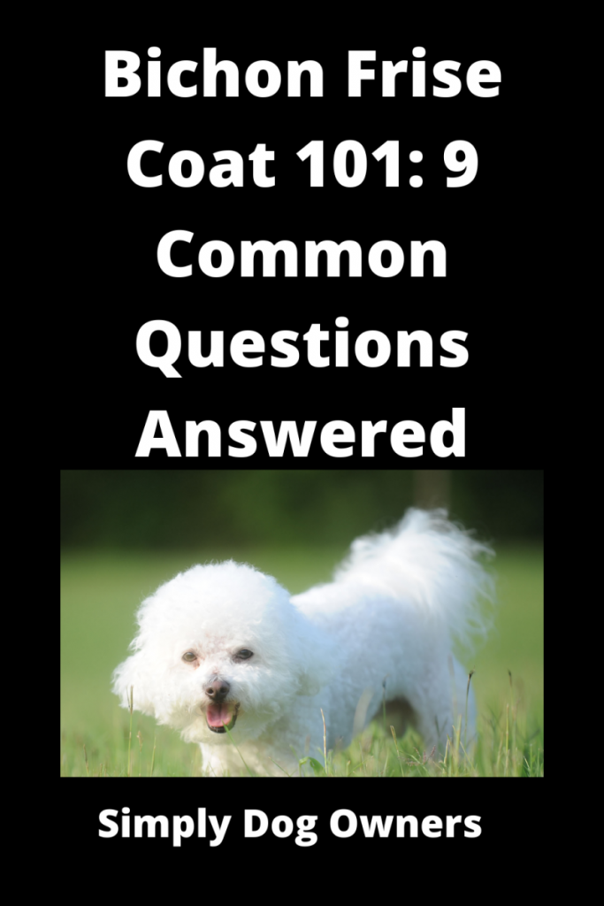 Bichon Frise Coat 101: 9 Common Questions Answered 3
