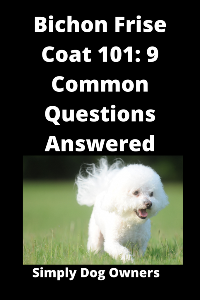 Bichon Frise Coat 101: 9 Common Questions Answered 1