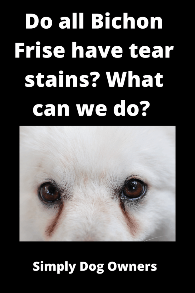 Do all Bichon Frise have tear stains? ( 3 DIY Videos) 2
