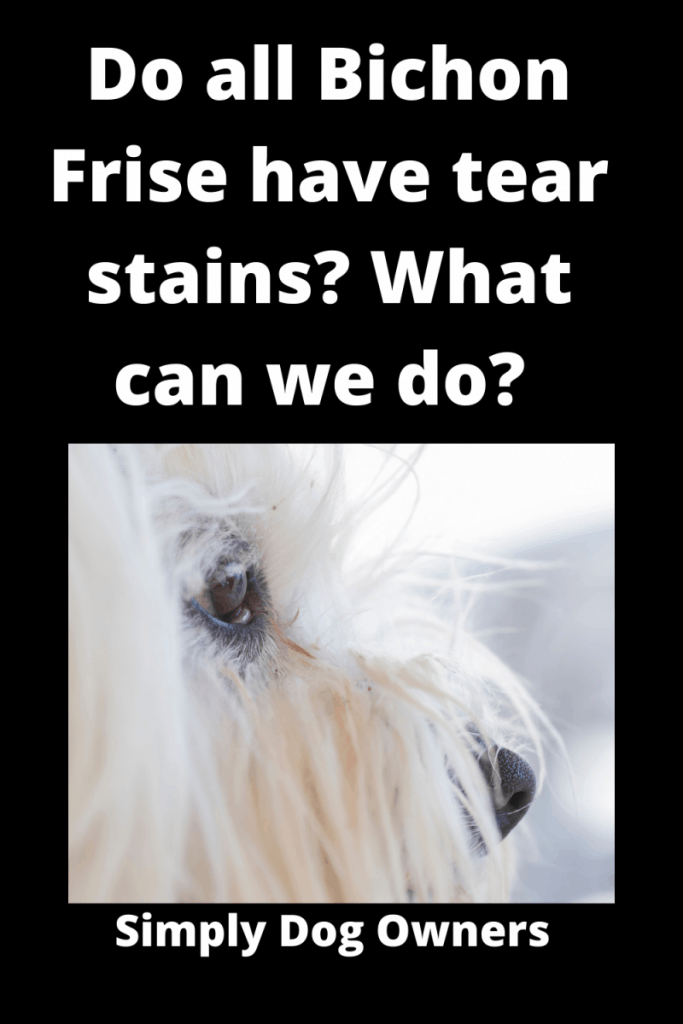 Do all Bichon Frise have tear stains? ( 3 DIY Videos) 1