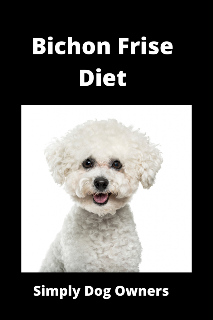 Bichon Frise Diet: How to Deal with a Picky Eater 3