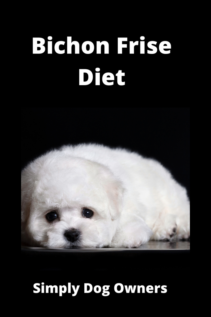 Bichon Frise Diet: How to Deal with a Picky Eater 2