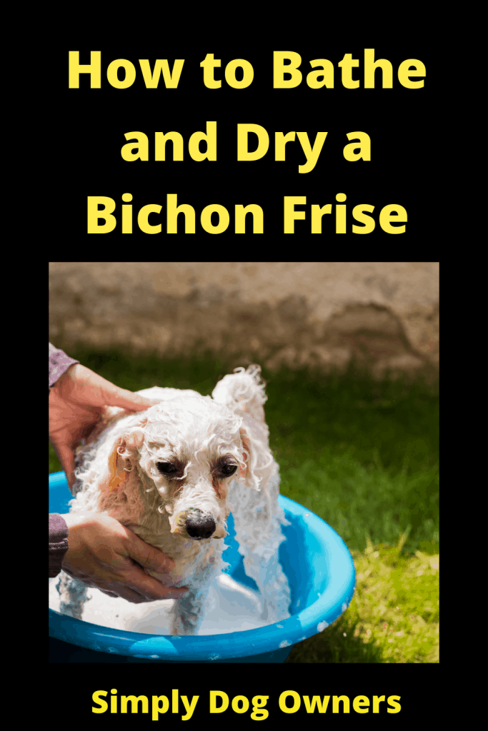 How to Bathe and Dry a Bichon Frise: The Essential Guide 1