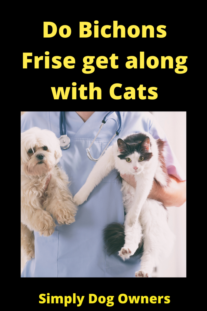 Do Bichons Frise get along with Cats 4