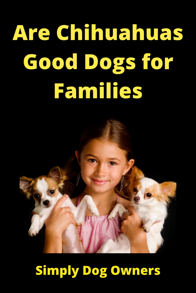 Are Chihuahuas Good Dogs for Families 2