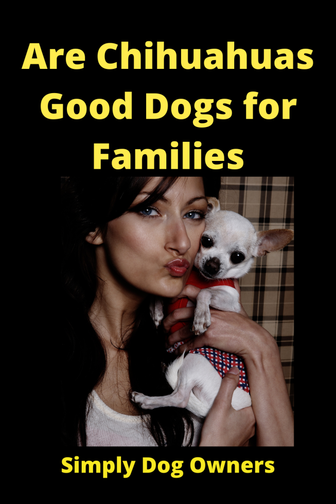 Are Chihuahuas Good Dogs for Families 3
