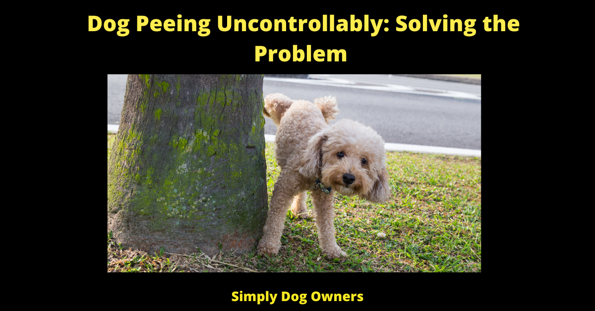 Dog Peeing Uncontrollably: Solving the Problem